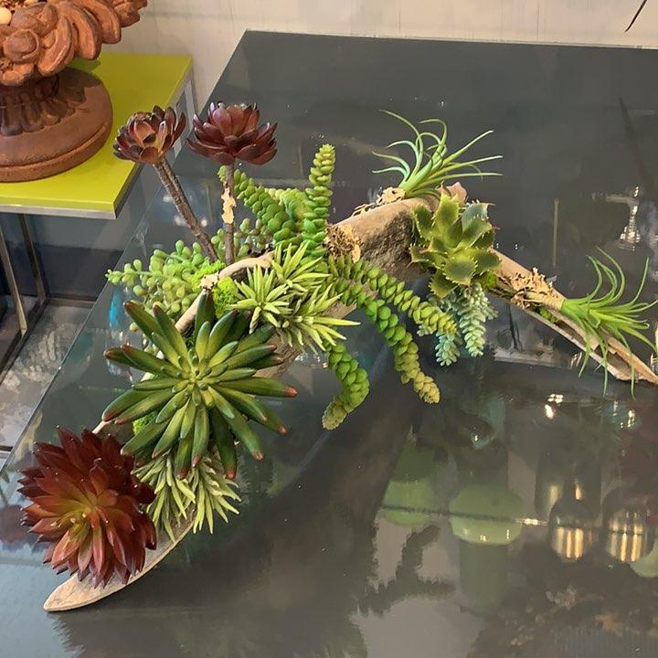 Log Succulents