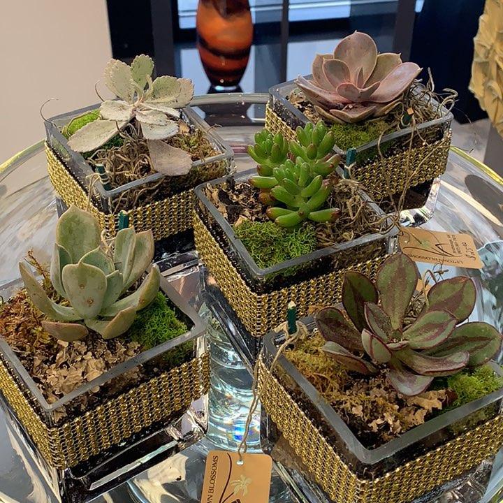Desktop succulents