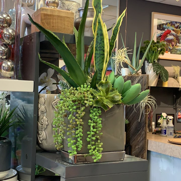 Grey ceramic with succulents