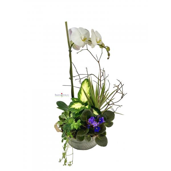 Exotic Planter Designer Choice