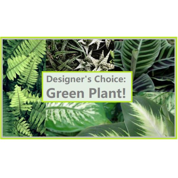 DC Green Plant