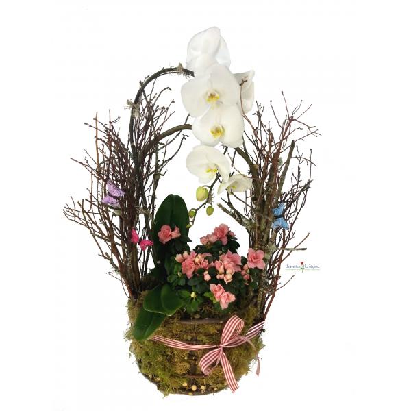 Orchid Basket Forest
