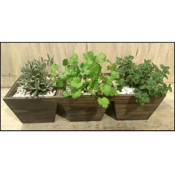 Herb Window Planter