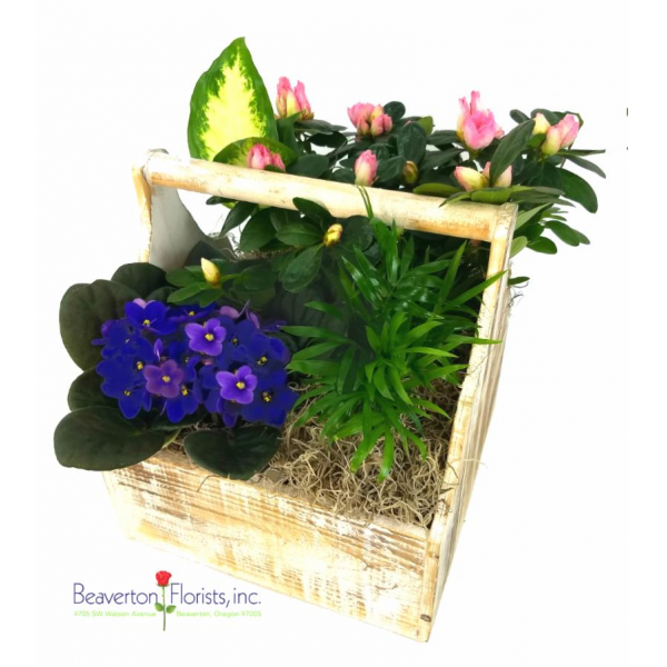 Beaverton Florists Beaverton - A wonderful new version of our garden basket.  2 green plants, 2 blooming plants in a beautiful wooden box.