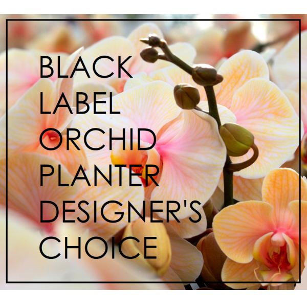 Black Label DC orchid planter