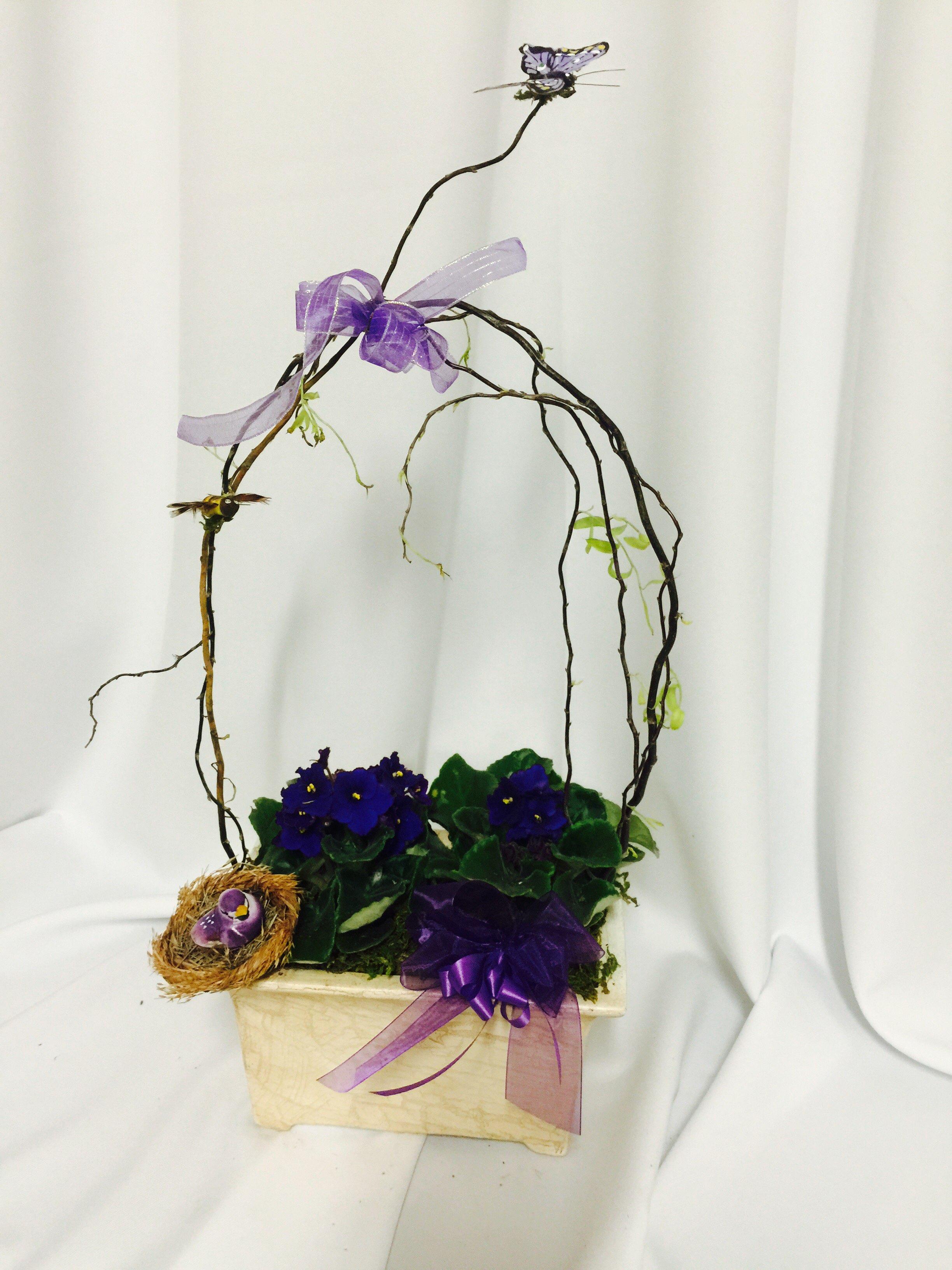 violets in abundance