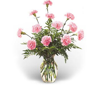12 Pink Carnations in a Vase