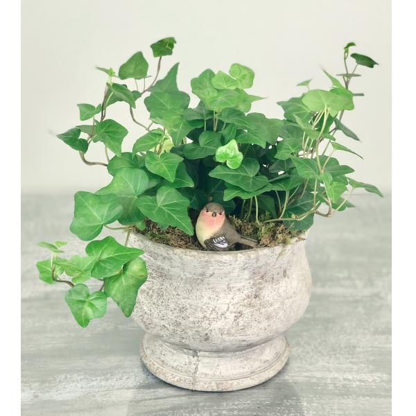 Ivy Plant in Ceramic Bowl