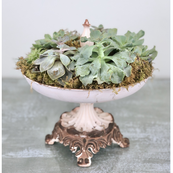 Compote of Succulents