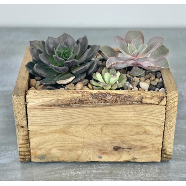 Succulent Reclaimed