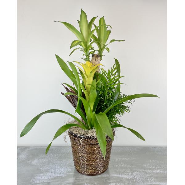 Combo Plant