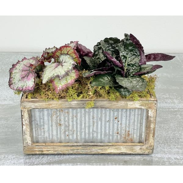 The Begonia Box