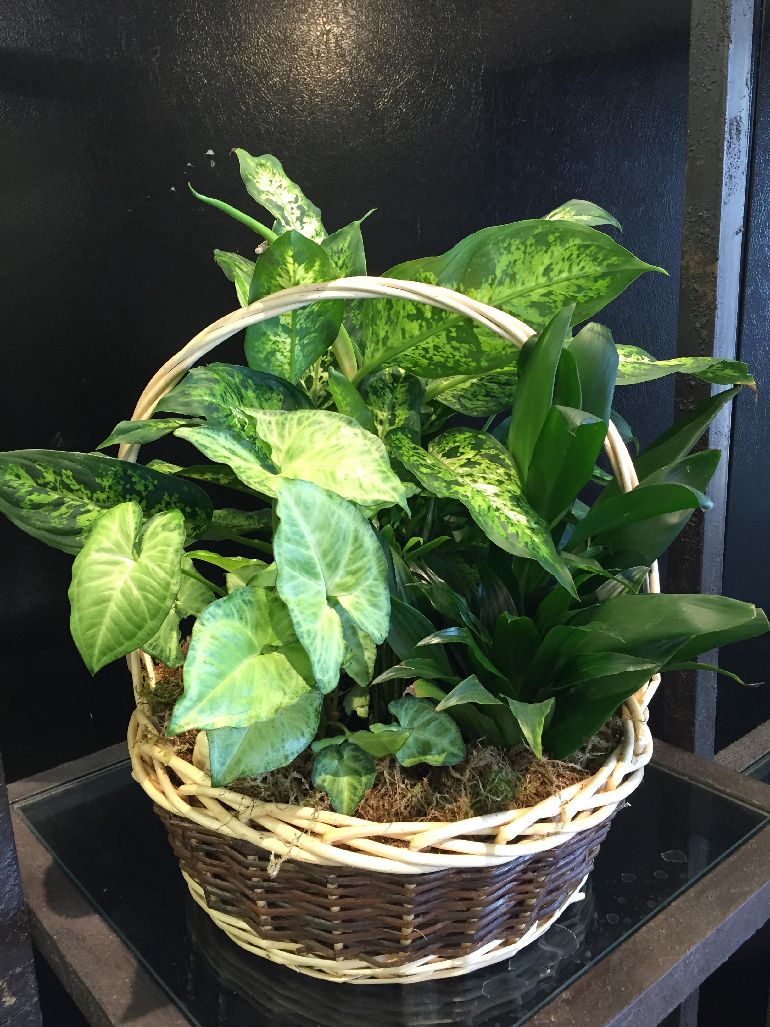 Extra Large Basket Garden