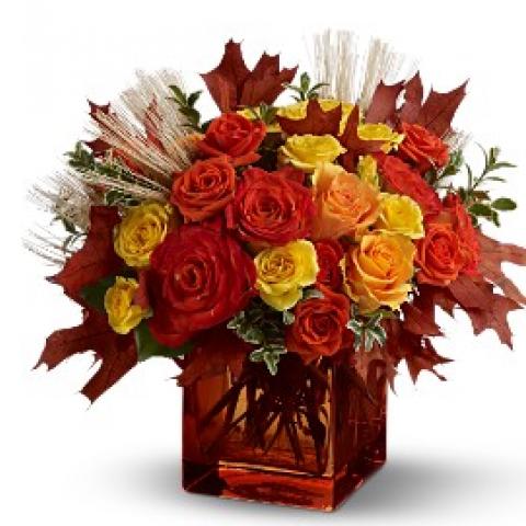 Fine Fall Roses