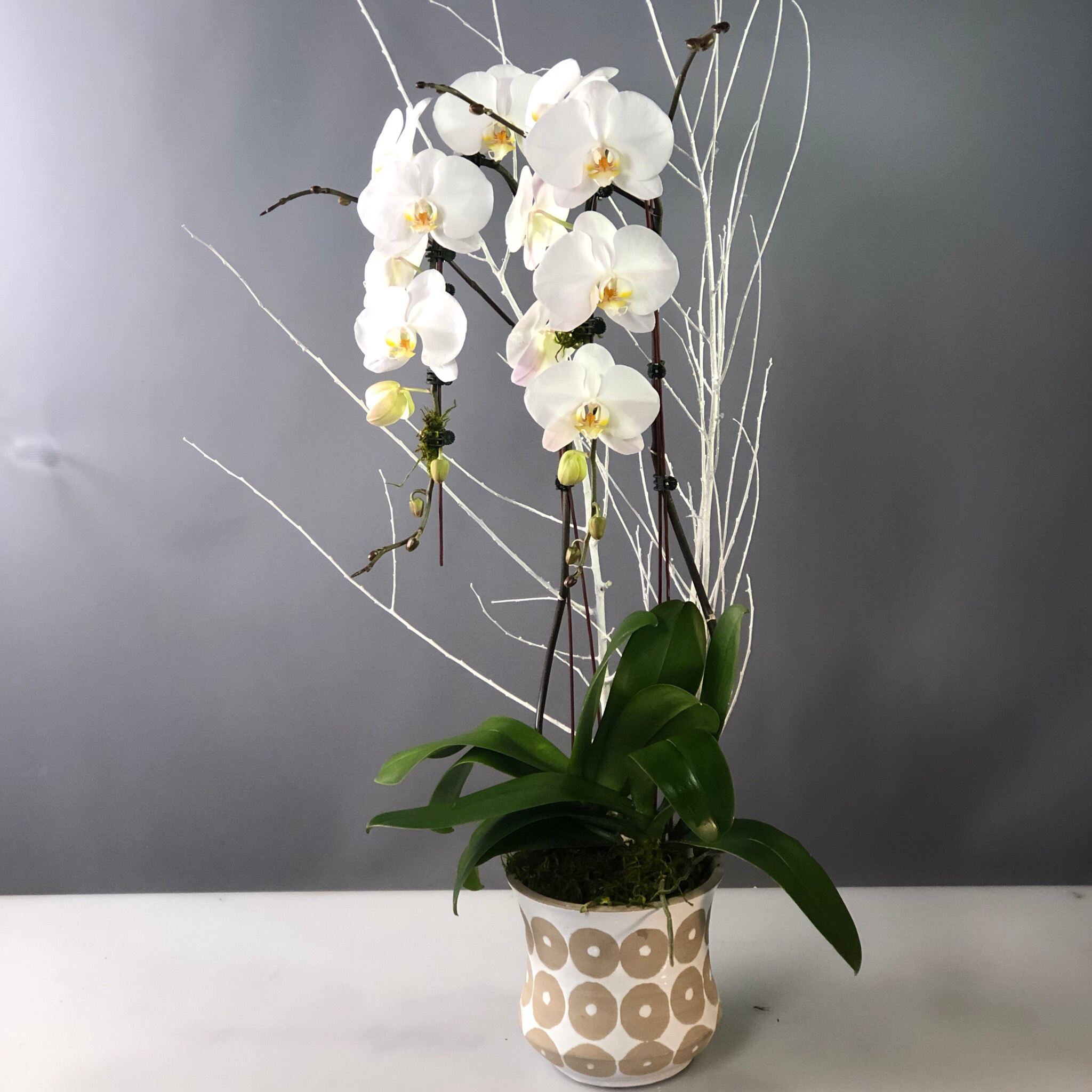 Orchid Premium Waterfall