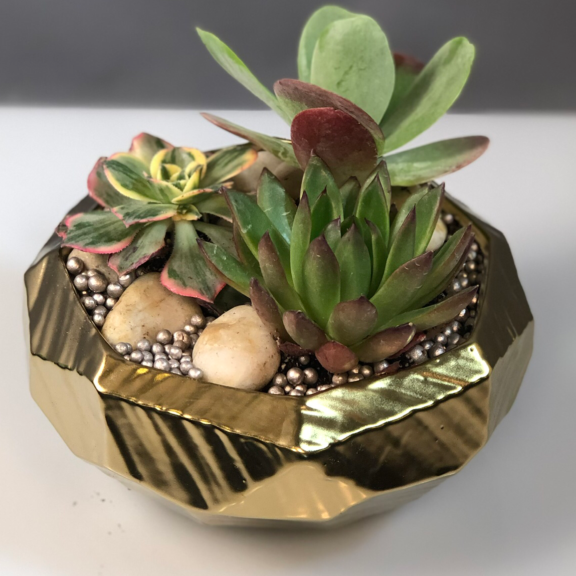 Sophisticated Succulents