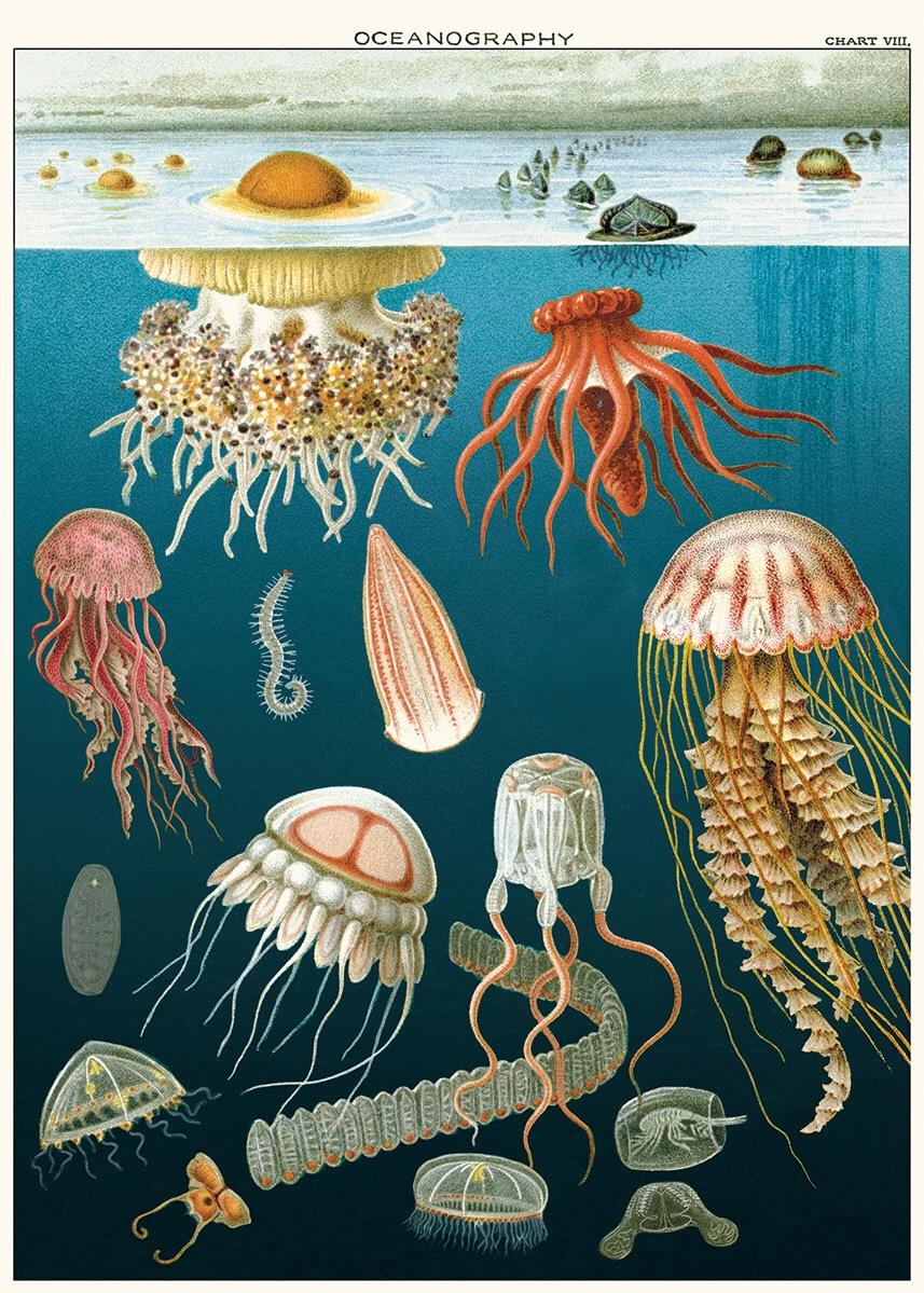 Jellyfish Puzzle