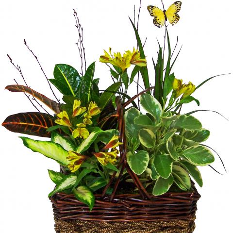 Reno & Sparks Flower Delivery | Sparks Florist® - Sparks Sunshine Basket