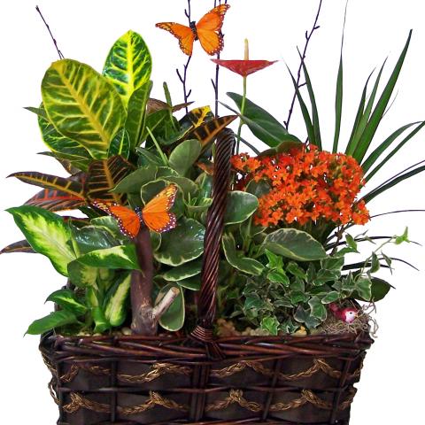 Sparks Florist® - Sparks European Basket Garden