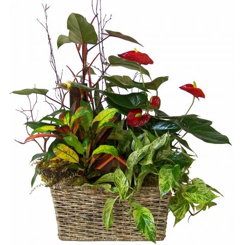 Reno & Sparks Flower Delivery | Sparks Florist® - Reno Grand European Basket Garden