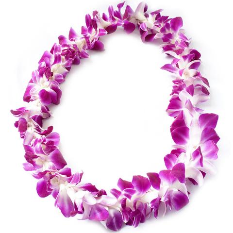 Sparks Florist® - Sparks Dendrobium Orchid Lei