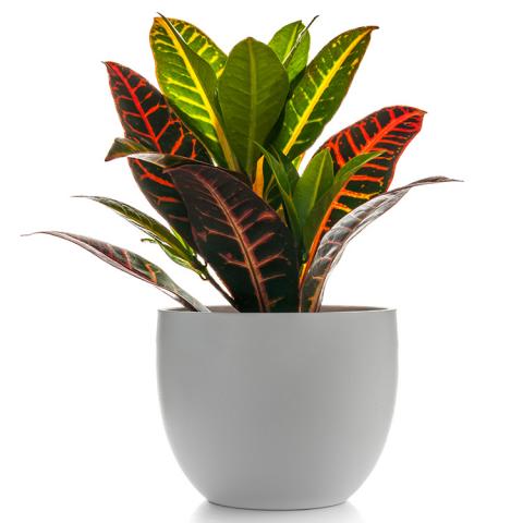 Reno & Sparks Flower Delivery | Sparks Florist® - Reno Croton