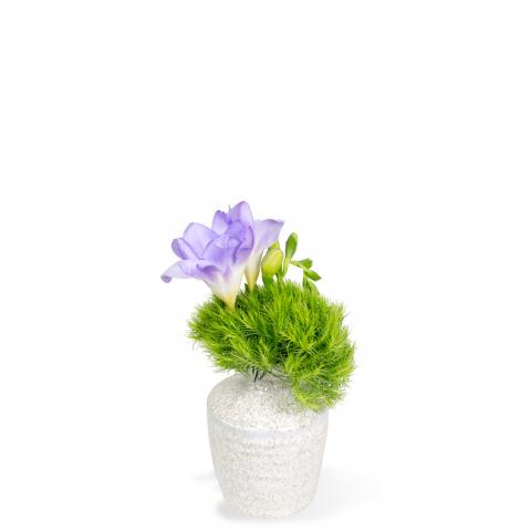 Sparks Florist® - Sparks Simply Chic