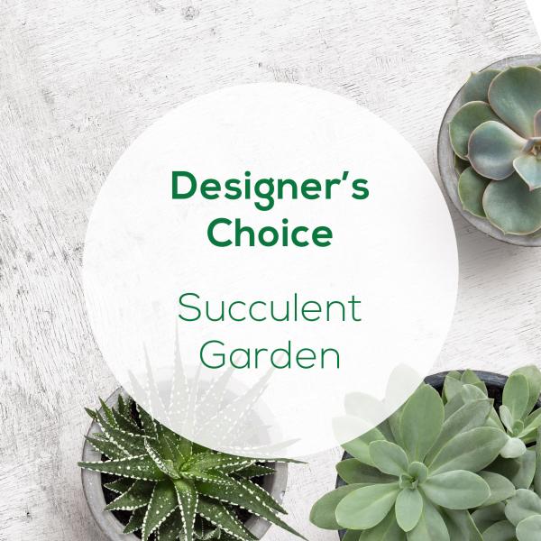 Designer's Choice<br>Succulent Garden</br>
