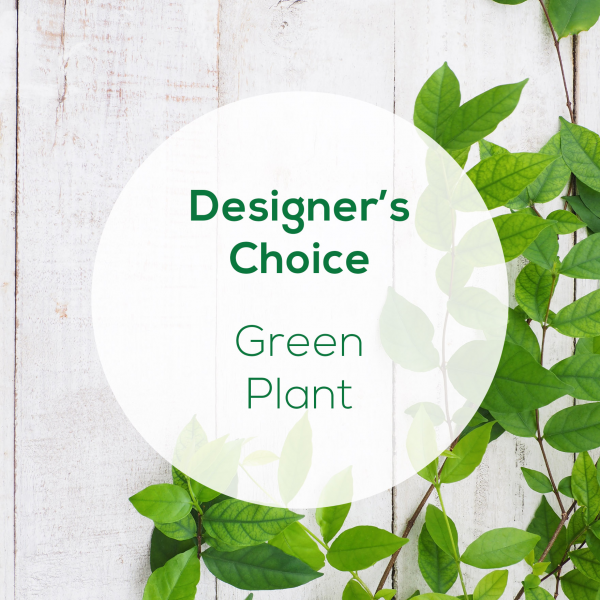 Designer's Choice<br>Green Plant</br>