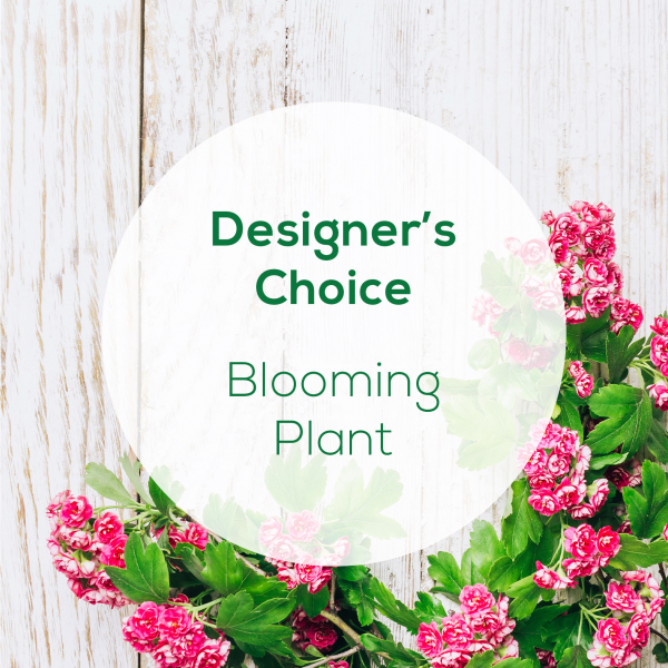 Designer's Choice<br>Blooming Plant</br>