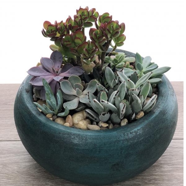 Mixed Succulent Garden in Jekyll Pot