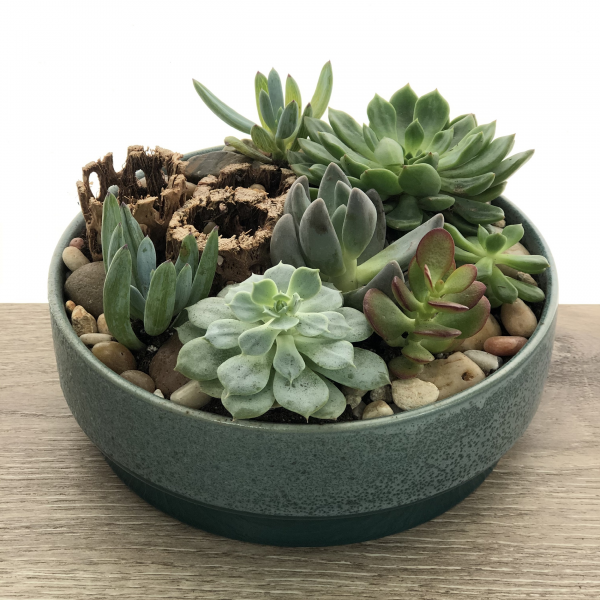 Mixed Succulent Garden in Rosebaum Pot