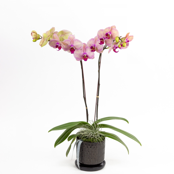 Orchid Luxe