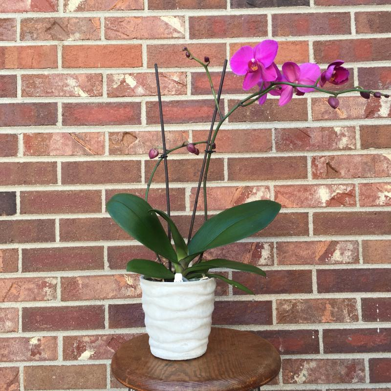 Colorado Tropical Orchid Plants