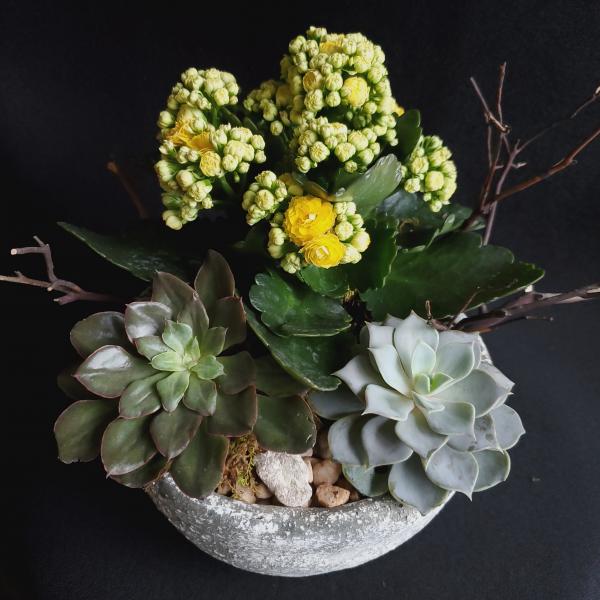 Succulent & Kalanchoe