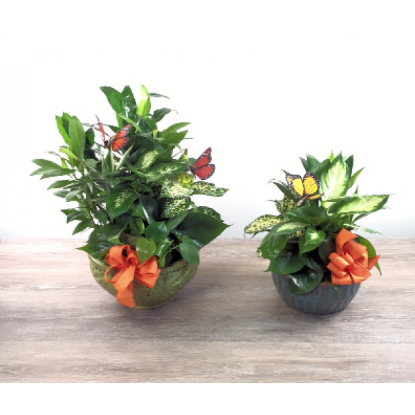 George's Flowers Dish Garden Planters