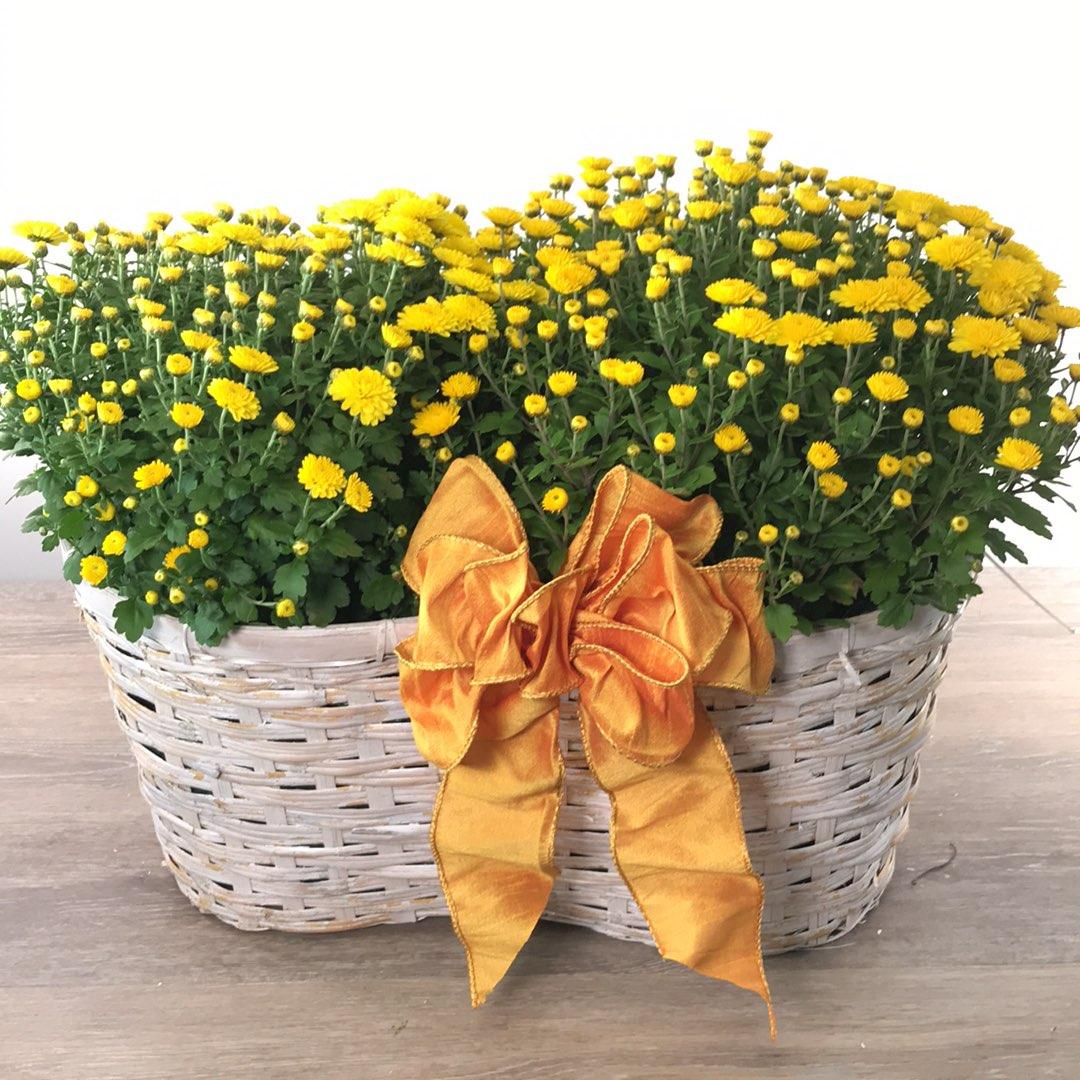 George's Fall Garden Mum Basket