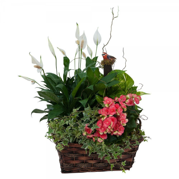 Living Blooming Garden Basket