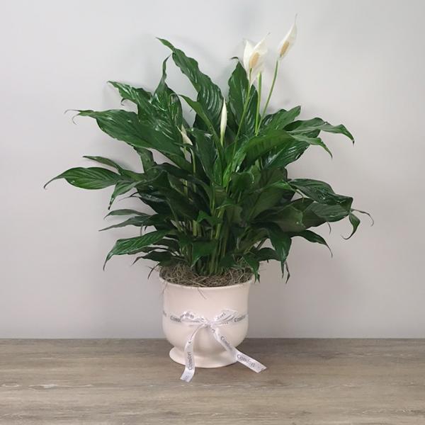 Comfort Planter Medium