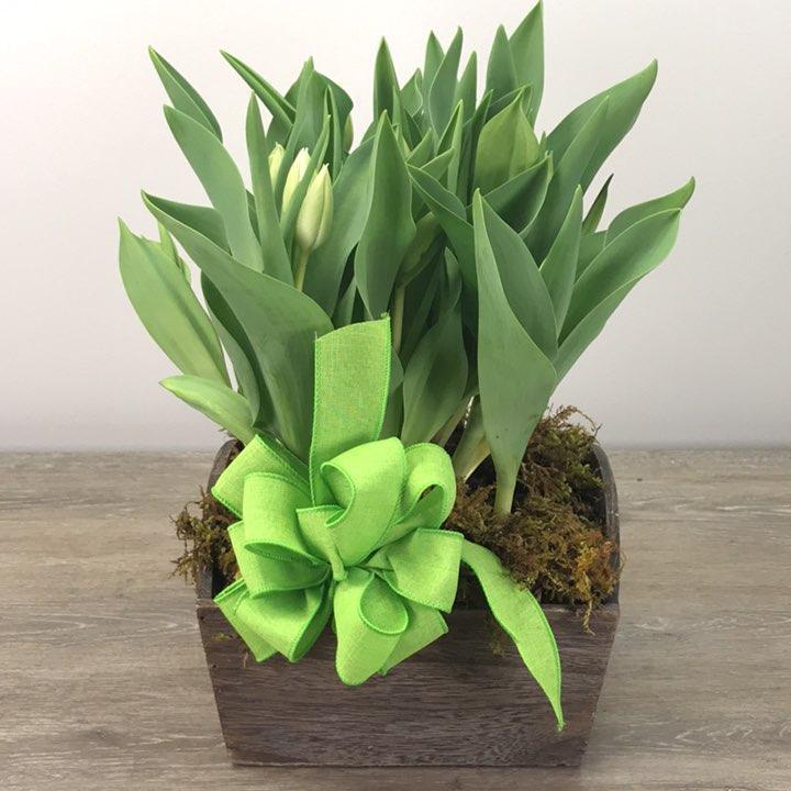 George's Tulip Planter