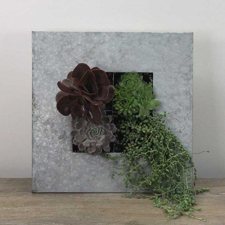 Living Succulent Wall B