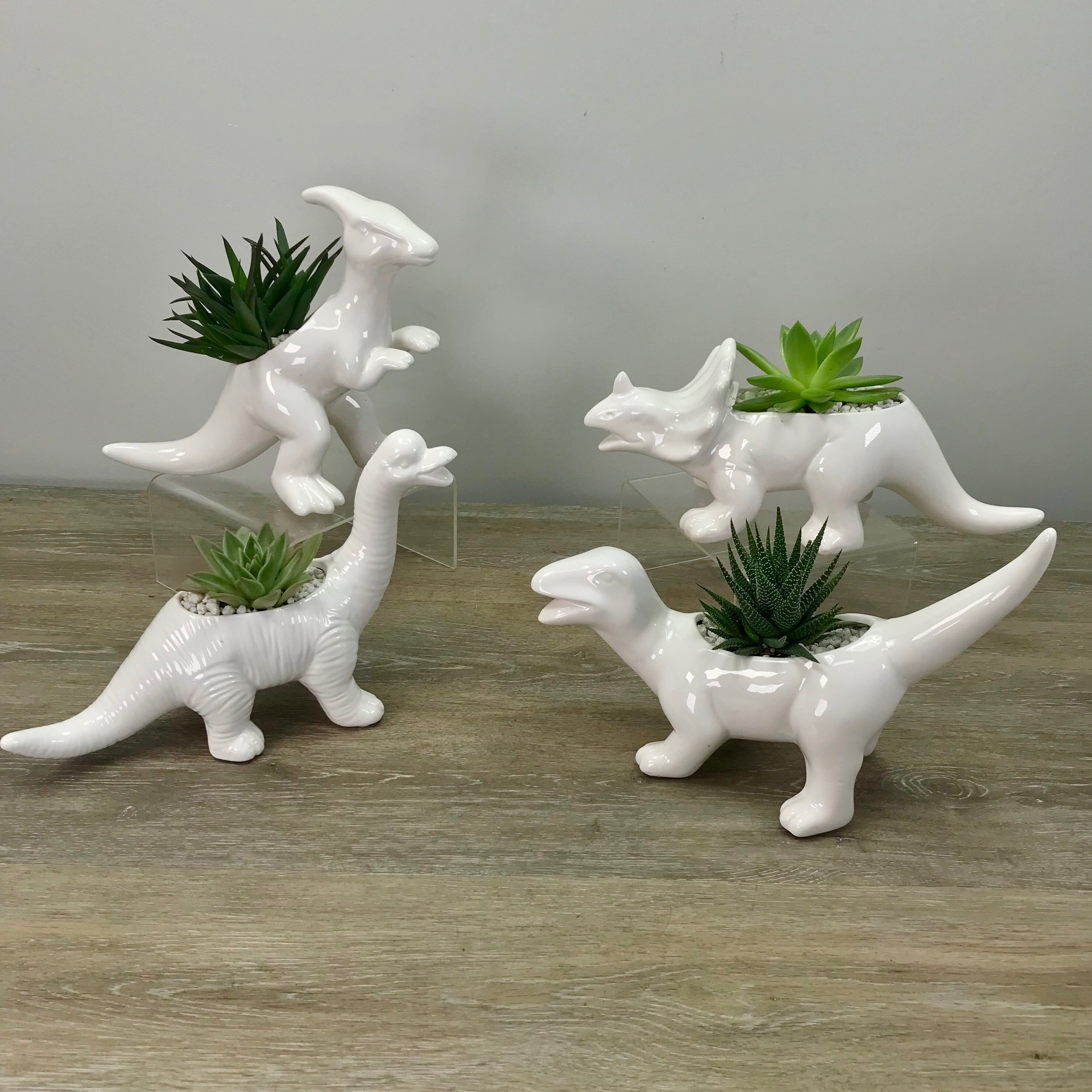 Dino-Time Succulents