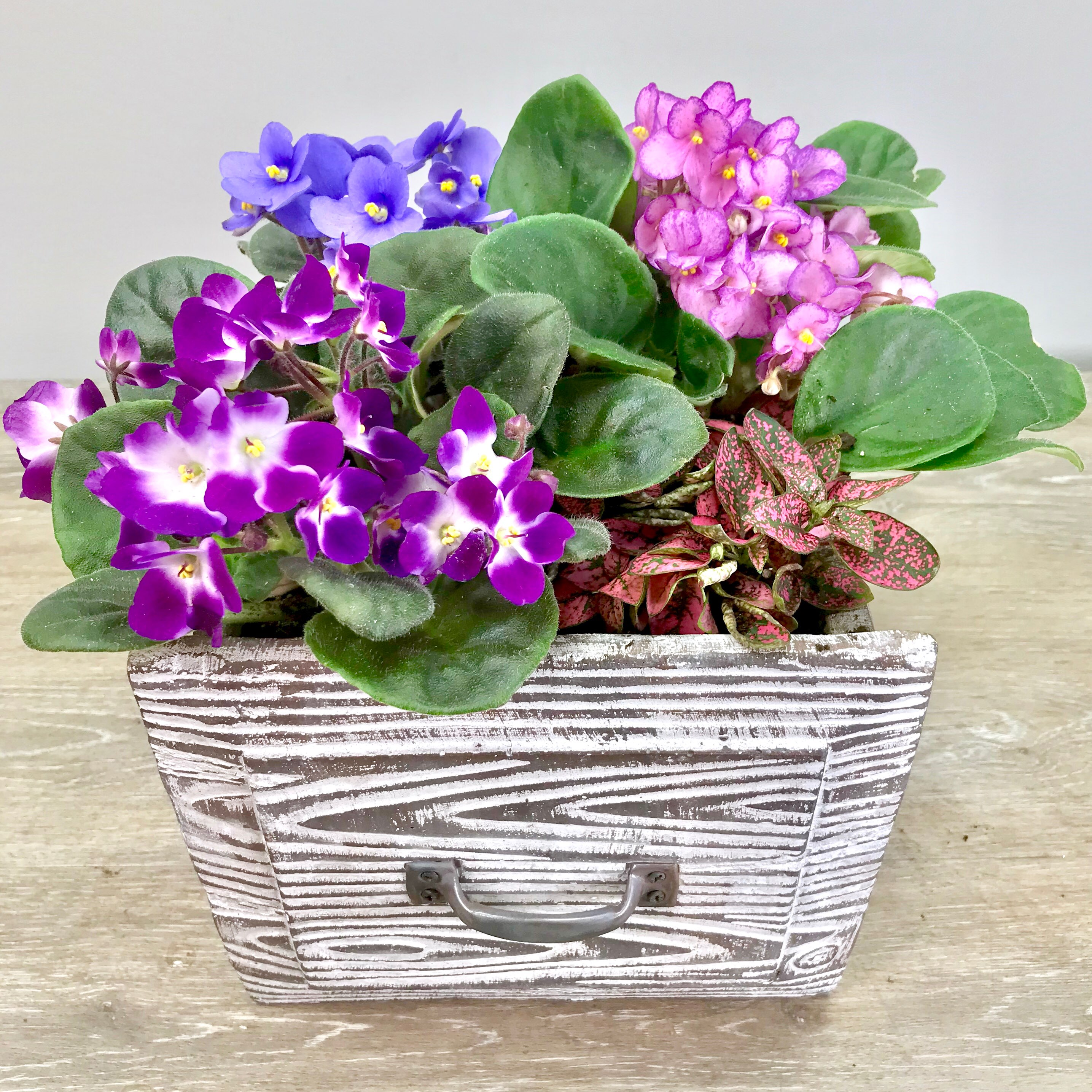 African Violet Vintage Drawer Planter