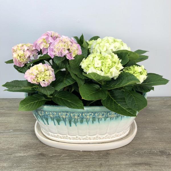 Spring Hydrangea Duo