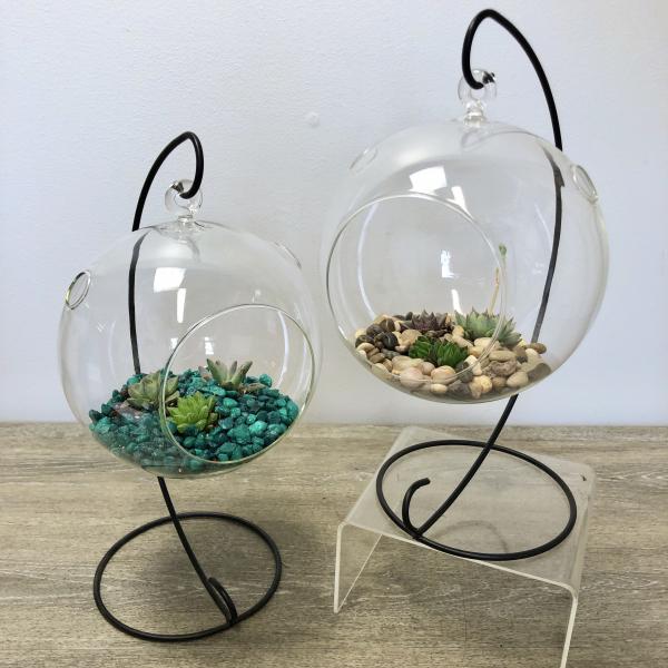 Hanging Succulent Globe