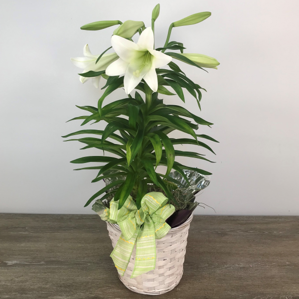 Easter Lily (1 Stalk)