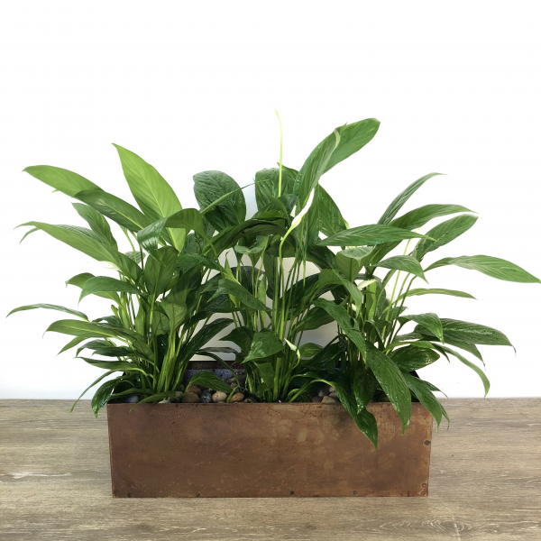 Industrial Peace Lilies