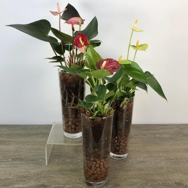George's Anthurium Vase