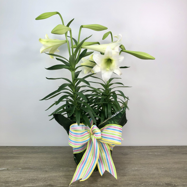 Easter Lily (2 Stalk)