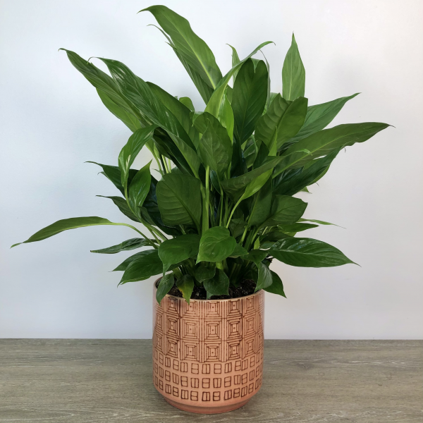 Peace Lily in Ceramic